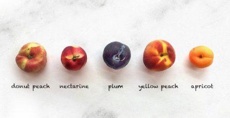 Nectarine - Magalies Citrus
