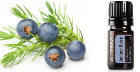 """J"" is for Juniper Berry! - Magalies Citrus - A-Z FRUIT CELEBRATION"